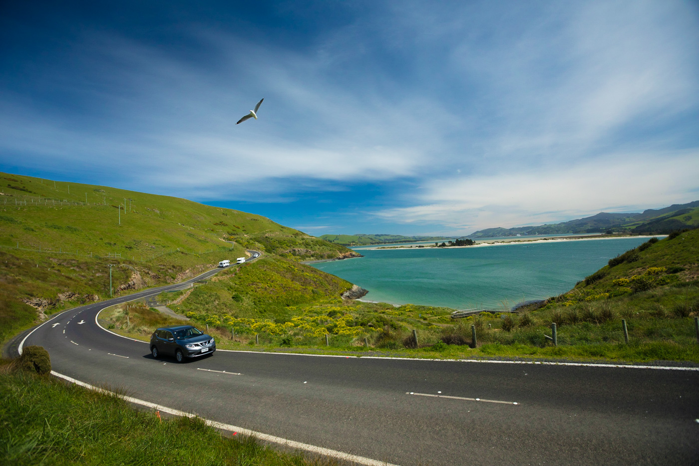 This is pretty much baseline New Zealand. Windy road, green hills, blue water, blue skies and birds