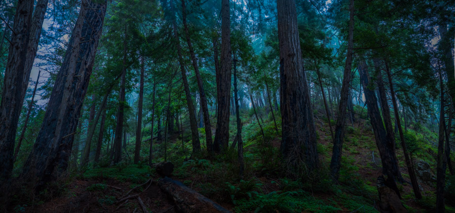 Redwood Fog and the Big Sur Experience (new band name?)